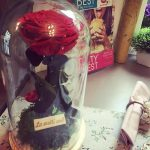 red-rose-xl