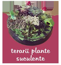 terarii plante suculente