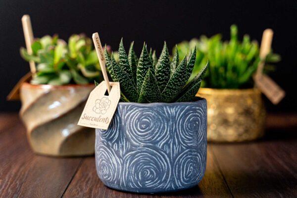 Aloe in vas de ceramica Rustic (1)