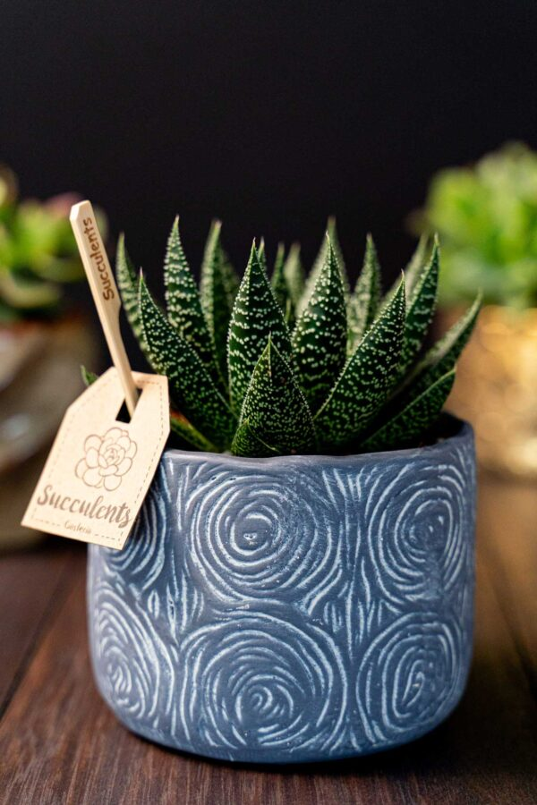 Aloe in vas de ceramica Rustic (2)