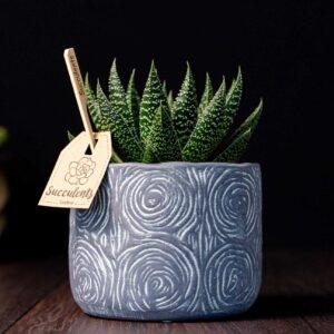 Aloe in vas de ceramica Rustic
