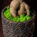 Bonsai – Ficus Ginseng (4)