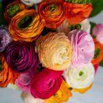 Buchet cu ranunculus multicolor + Vaza Deluxe