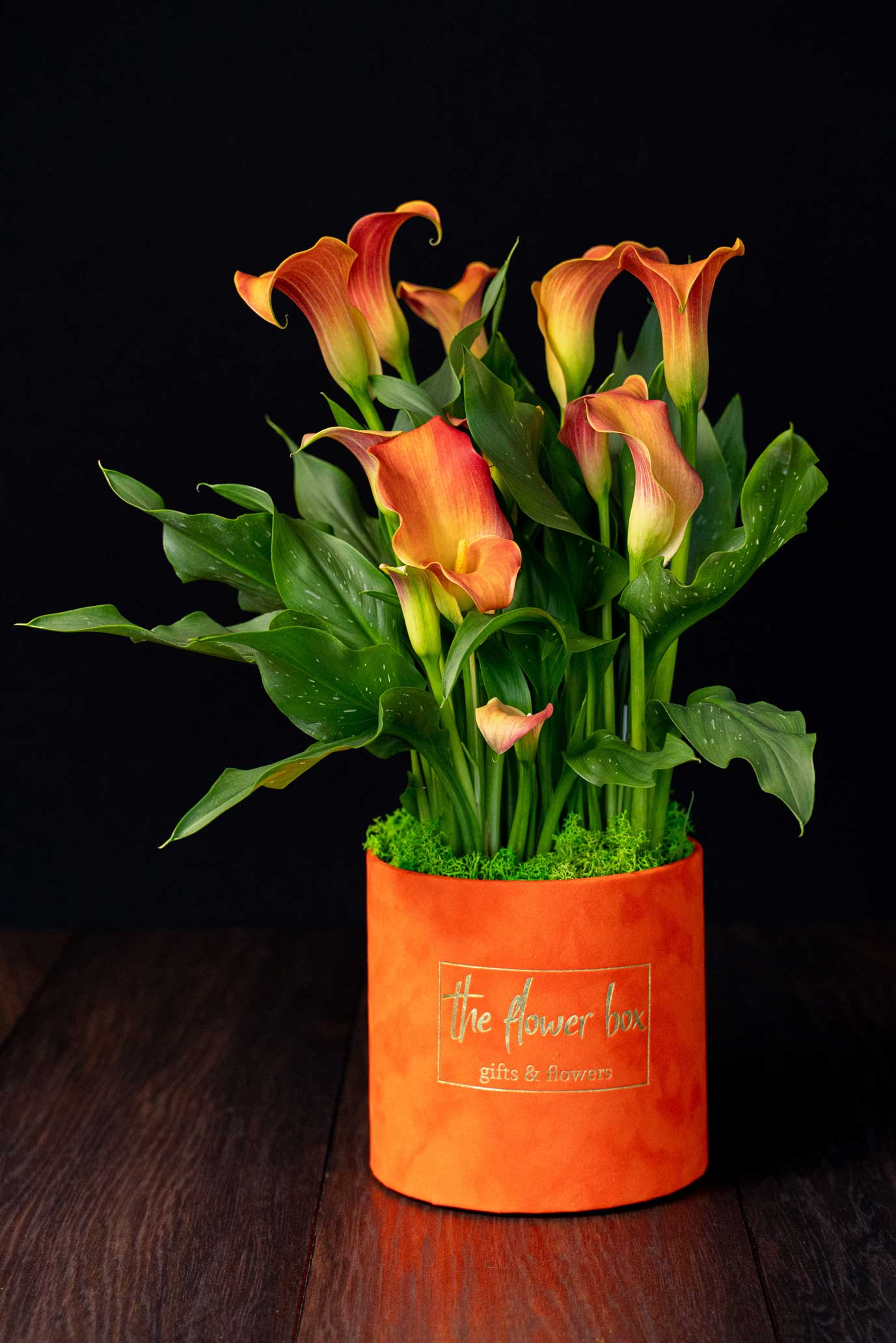 Cala – Zantedeschia Big Orange