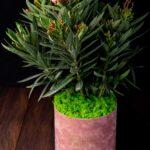 Leandru Pure Pink 75-85 cm