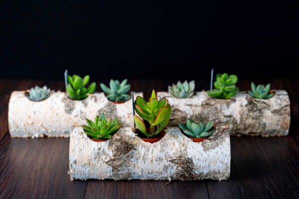 Plante suculente in Mesteacan (10)