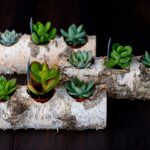 Plante suculente in Mesteacan (6)