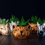 Plante suculente in Vas Ceramica tip Animals (1)