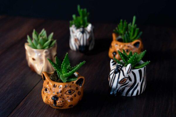 Plante suculente in Vas Ceramica tip Animals (2)