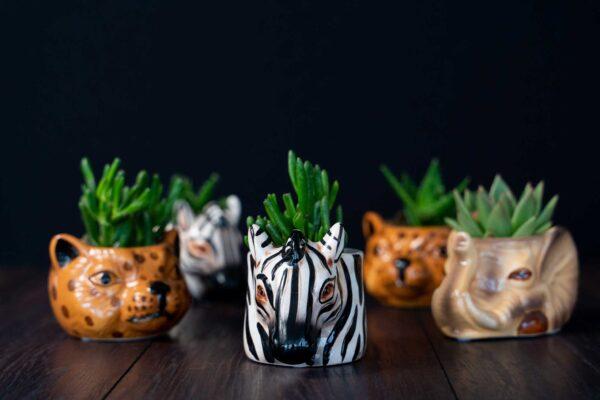 Plante suculente in Vas Ceramica tip Animals (3)