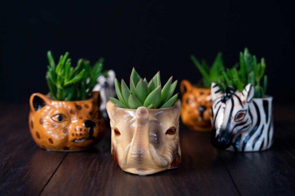 Plante suculente in Vas Ceramica tip Animals (4)