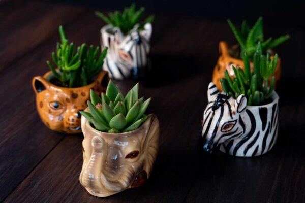Plante suculente in Vas Ceramica tip Animals (5)