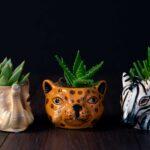 Plante suculente in Vas Ceramica tip Animals (6)