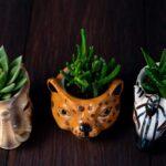 Plante suculente in Vas Ceramica tip Animals (7)