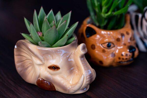 Plante suculente in Vas Ceramica tip Animals (8)