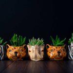 Plante suculente in Vas Ceramica tip Animals (9)