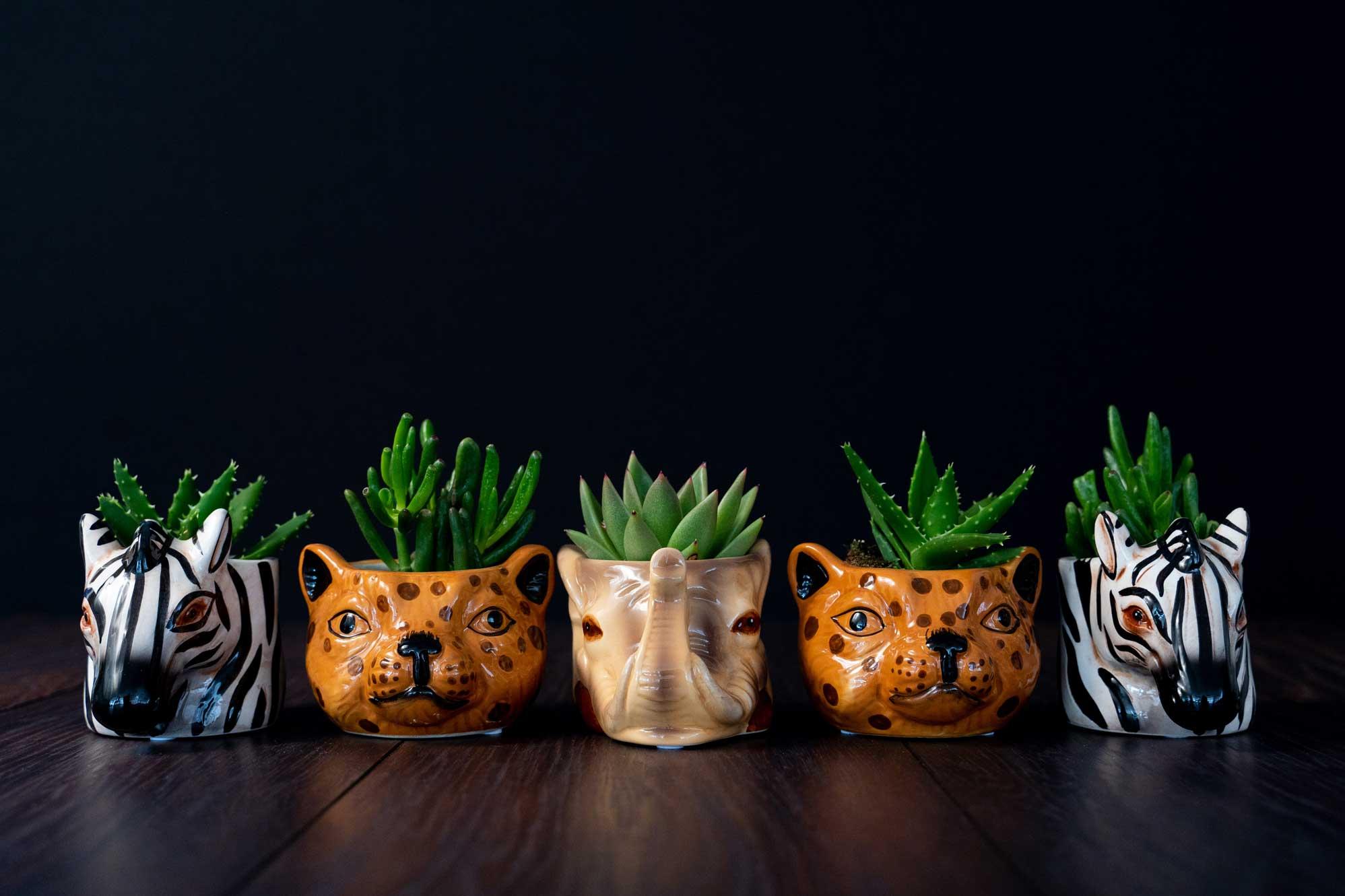 Plante suculente in Vas Ceramica tip Animals