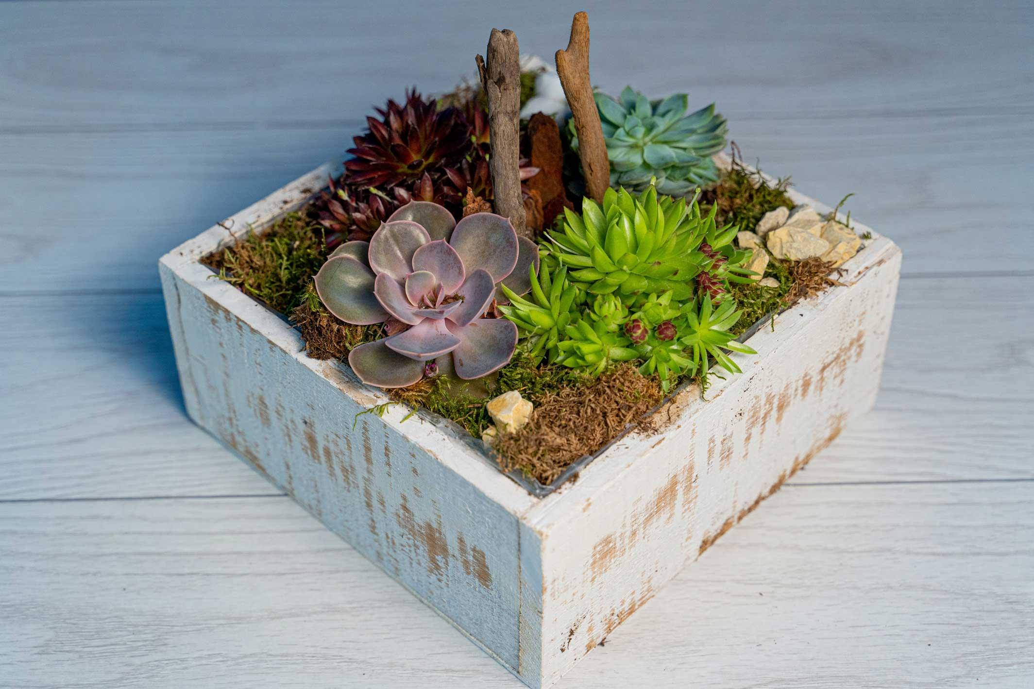 Terariu plante suculente Special Wood