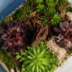 Terariu plante suculente Strong Wood