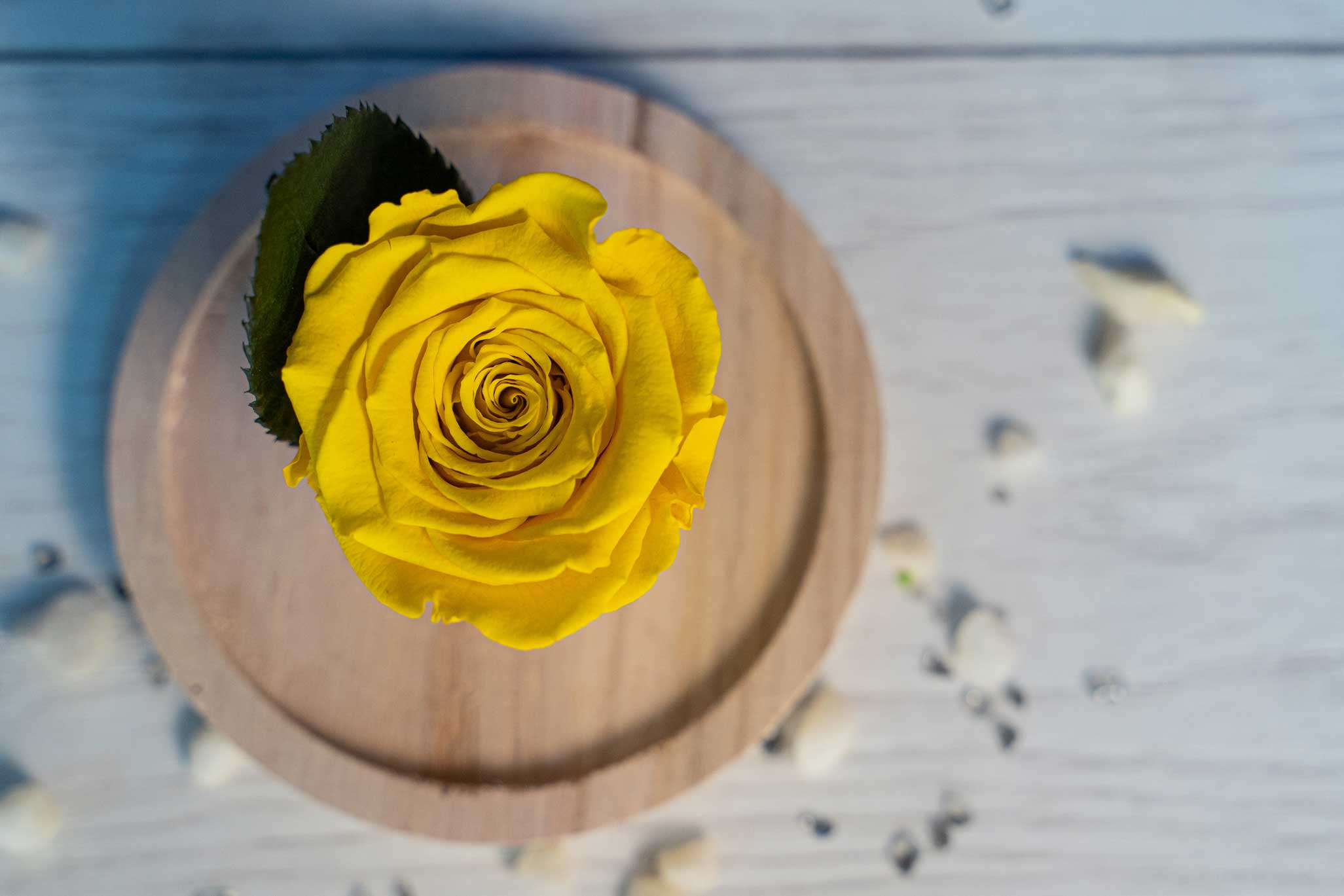 Trandafir Criogenat Galben in Cupola