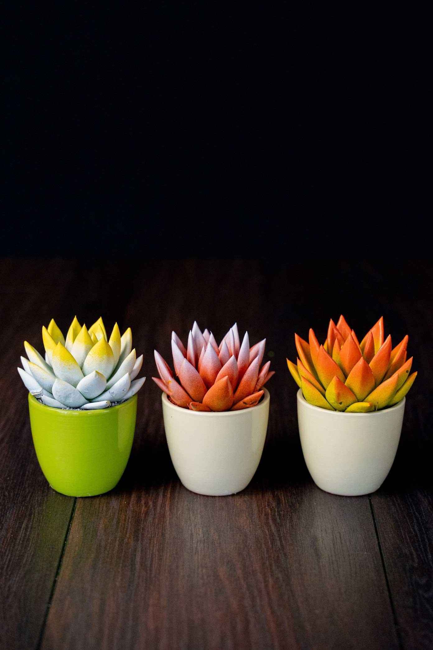 Mix 3 Plante suculente Colours