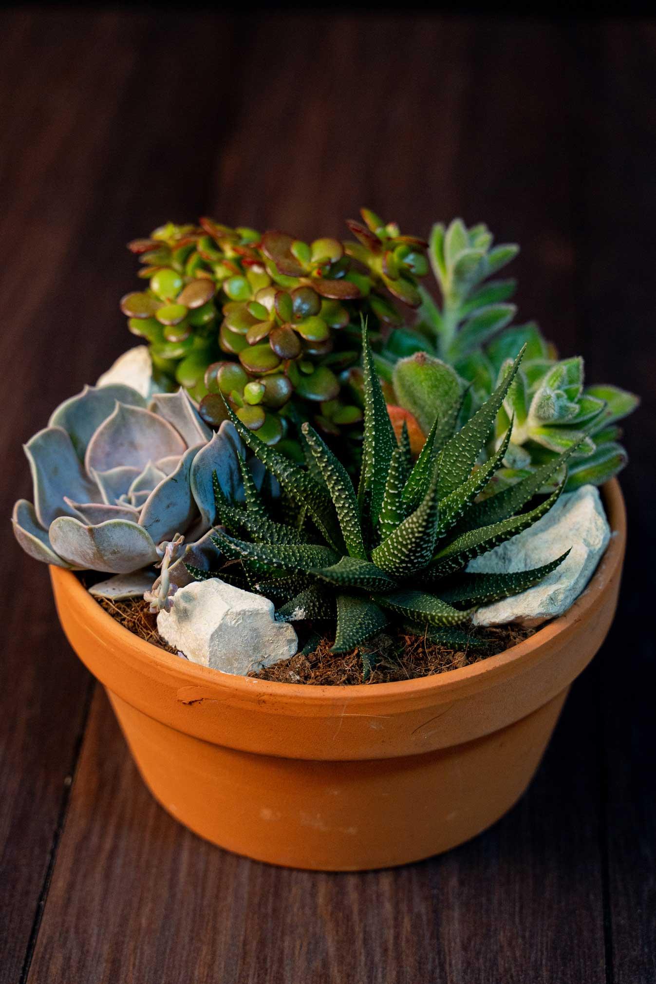 Terariu Plante suculente in vas Terracotta