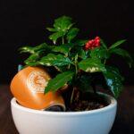 Aranjament cu Arbore de cafea