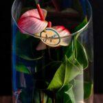 Anthurium HotLips in Vas de sticla Deluxe